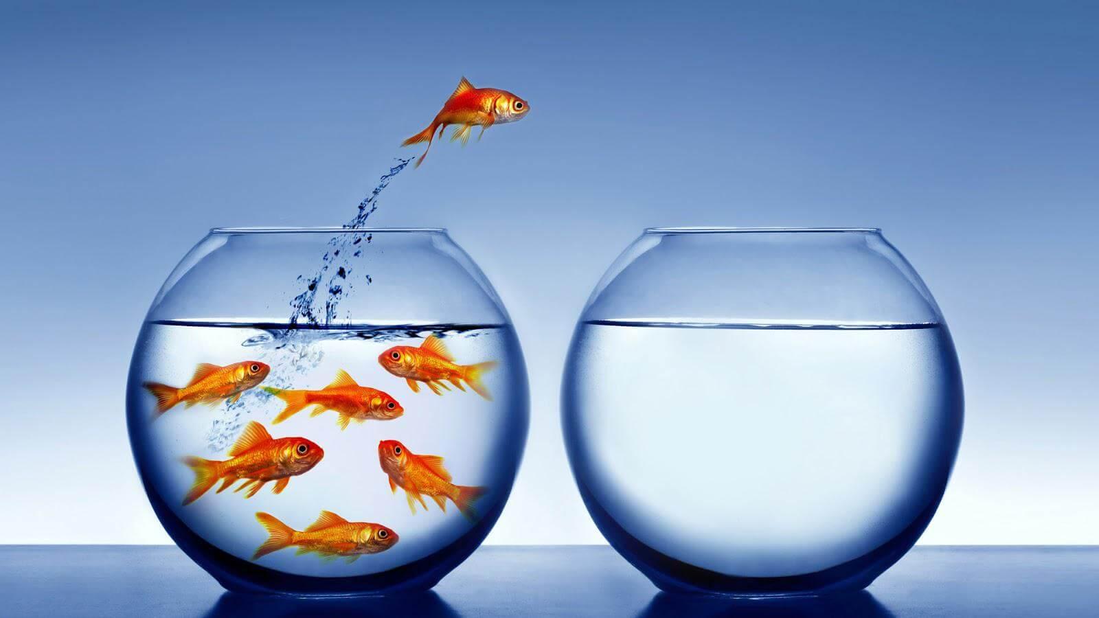 Qué nos sucede ante los cambios? | Blog de Mindic