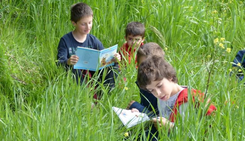 Niños leyendo en verano